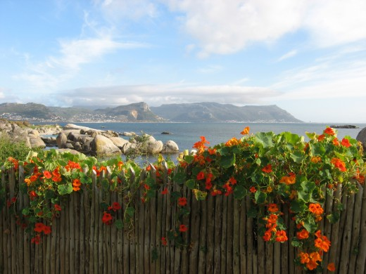 View from the Boardwalk at Bolders Beach, South Africa