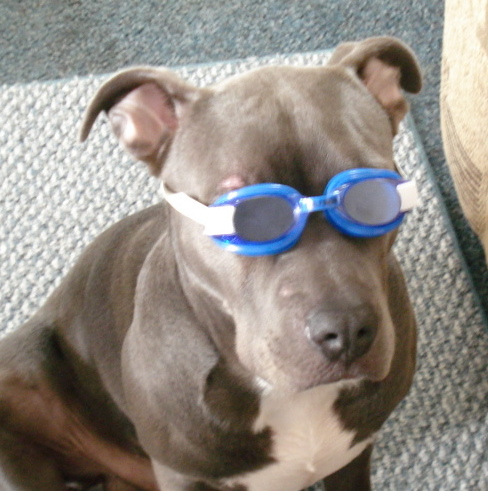 Dog in goggles.