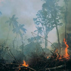 Revealing the Daily Destruction of the World's Tropical Rainforests