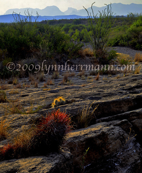 The Chihuahuan Desert provides many opportunities for good photography.  Use care when hiking off trail or off road.