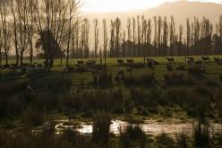 NZ's Main Industry Photo: chris24w