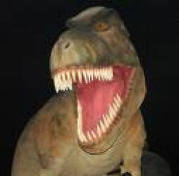 Artist's Impression of a T-Rex.  That was no NHS dentist for sure! Also, its teeth grew irregularly as they were lost.