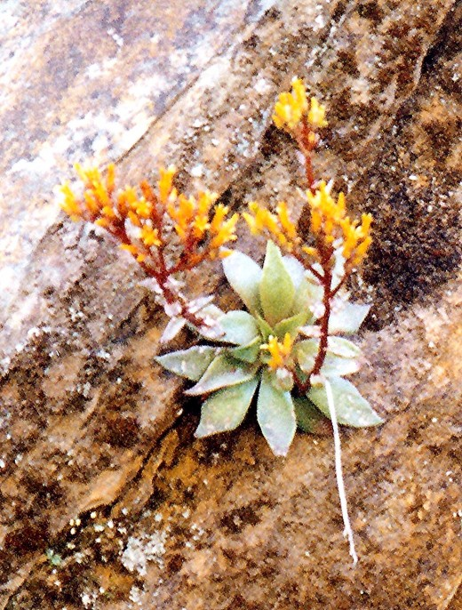 Life springing up out of a crack in the rock