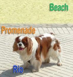 My Dog Rio Near The Beach in Spain