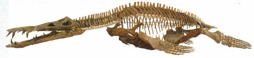 Liopleurodon skeleton.  This was 18-meter juvenile, suggesting much larger ones were around in the Jurassic.    shaniaforums.com photo