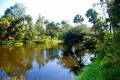 The Peace River, a Walk With Nature in Wauchula Florida.