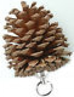 Pine cone cache