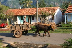 Horse and cart is a common form of transportation