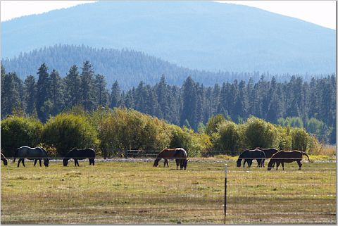 Black Butte Ranch - about 25 minutes away from Bend, Oregon (c) Stephanie Hicks