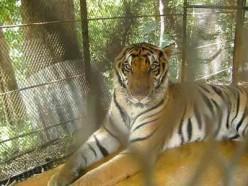 D'Family Park Zoo in Cebu City