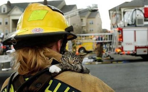 my house burned down but this nice human seems nice to save me!