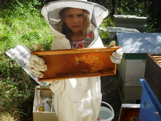 Little princess collecting honey