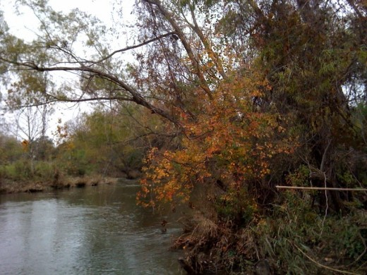 Brushy Creek in the Fall.
