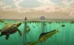 Sargasso Sea showing amphibians    amph.com