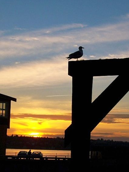 Seagull watches the sunset on another day