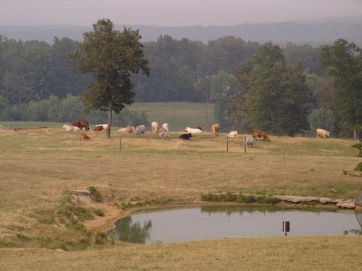August 2008 - Hallmark Farms