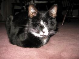 Spencer resting in a comfy loaf.