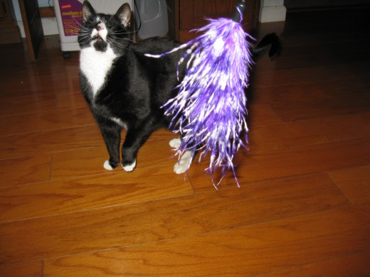 Spencer's favorite toy: feathers on a cord!