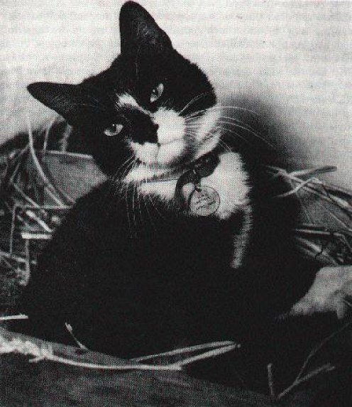 Simon, the HMS Amethyst's decorated cat.
