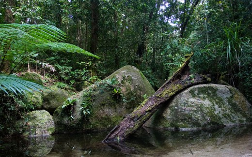 Daintree National Park in the rugged Cape York Peninsula.