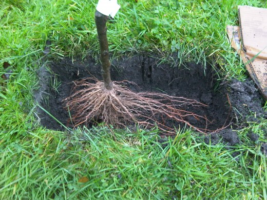 Use the roots of the tree to measure the correct depth.
