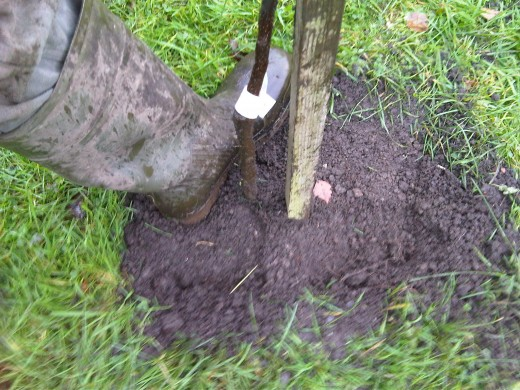 Compact the soil.