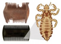 Resurgence of head lice in the UK