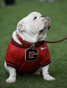 UGA Georgia Bulldog