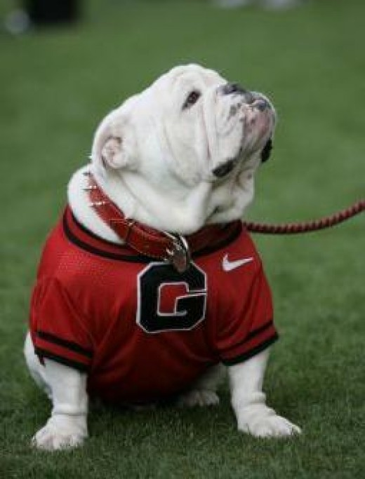 UGA Georgia Bulldog