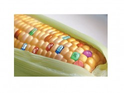 GMO Food: What do you think is really in that corn your eating?