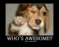 You're Awesome Because...