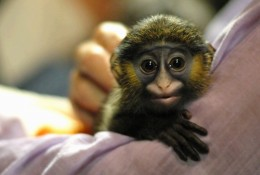 This monkey has quite an exotic look!