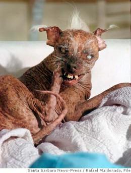 Hey, I'm the Vice Dog! Ya got a problim wi dat?