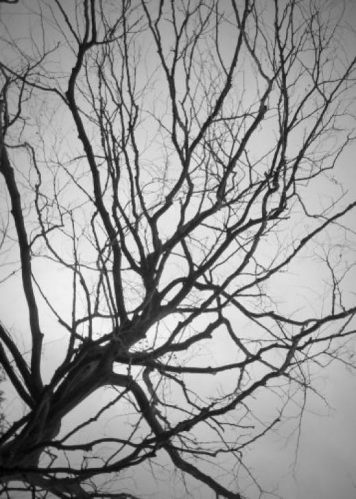 lifeless tree