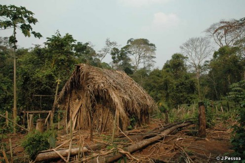 The 'Man of the Hole's' house and garden where he grows manioc and other vegetables  J.Pessoa.  Photo courtesy:  Survival