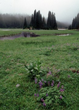 Meadow vegitation at Fish Lake area.
