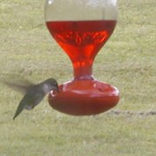 birdbathfountain profile image