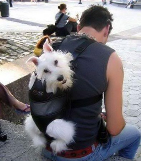 Get a Pet Sling or a Dog Backpack for Hands-Free Convenience