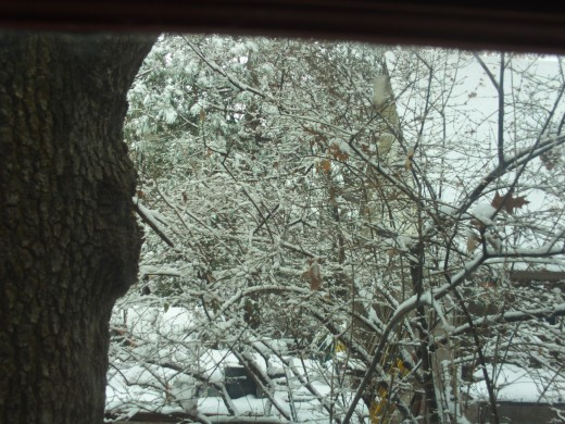 Snow lightly coating the branches of the trees.