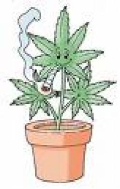 how to grow papaya plant