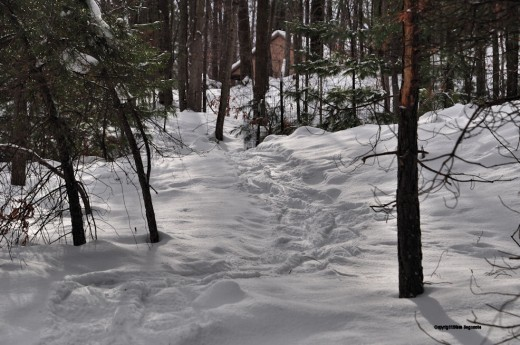 Sunlight streams down the trail made by snowshoeing to the creek.