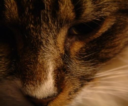 A cat named Mischief