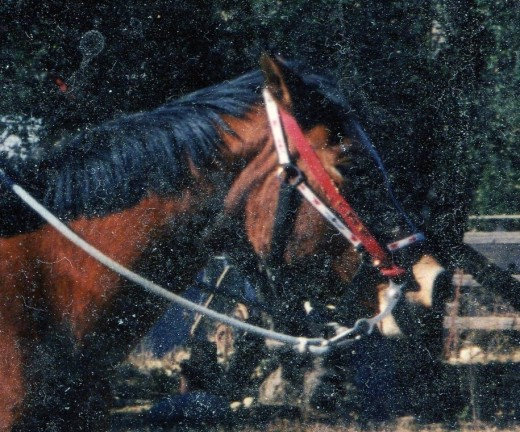 another horse I used in this type of behavior therapy
