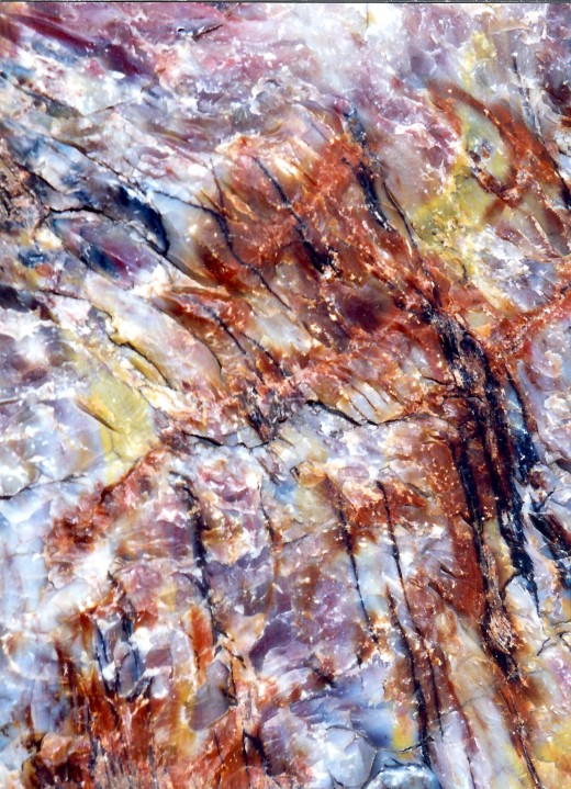 Close-up of the beautiful colors in petrified wood