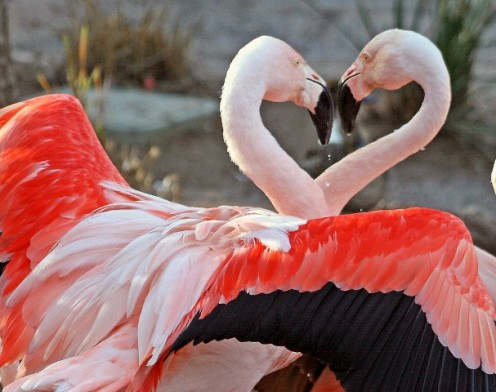 Love - Pink Flamingos - Kjunstorm