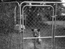 Chain-Link Dog Pen with Plastic Kennel