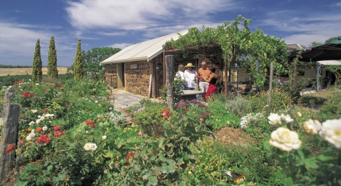 A McLaren Vale vineyard.  Photo courtesy of SATC