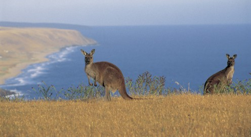 Deep Creek Conservation Park is a nature lover's paradise and is on the south coast of the peninsular.