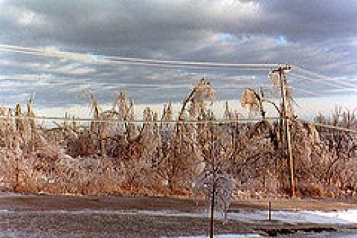 Many of the trees covered in Ice will break due to the overwhelming weight.