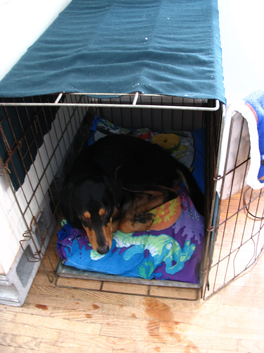 An old towel may suite your pup just fine, but a designer dog crate cover will enhance the beauty of any room.